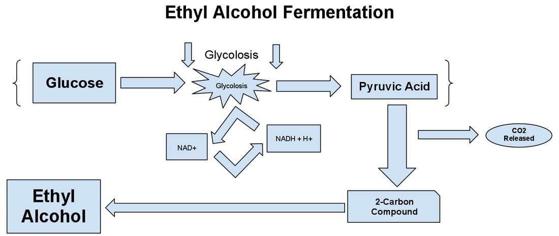 A diagram showing the process of ethyl alcohol fermentation